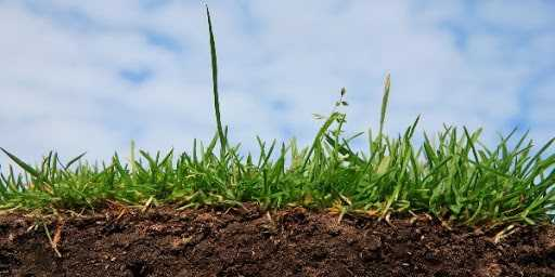 Навоз улучшает структуру почвы и повышает плодородие