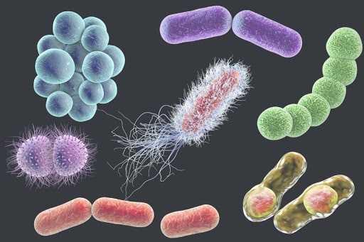вредные микроорганизмы, содержащиеся в навозе