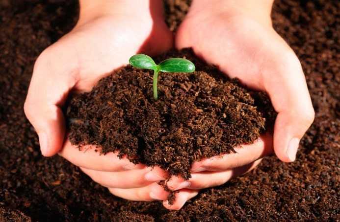 навоз содержит семена сорных растений