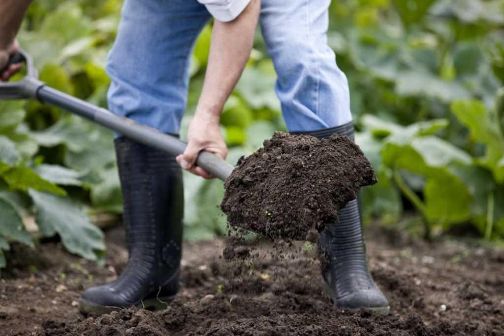 Грунт на лопате