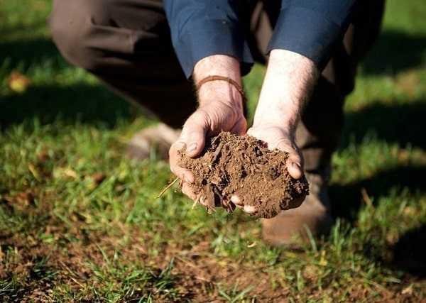 торф вносят в почву
